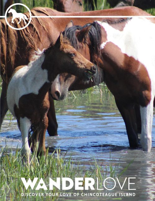Chincoteague is for Horse Lovers Itinerary